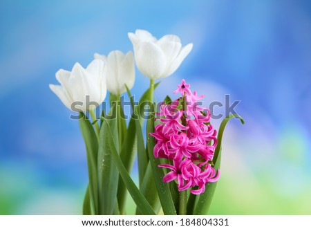 Beautiful tulips and hyacinth flower on bright background - stock photo