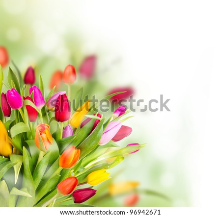 Beautiful tulips bouquet - stock photo