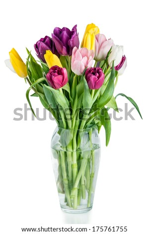 Beautiful Tulips Flowers in Vase isolated on white background  - stock photo