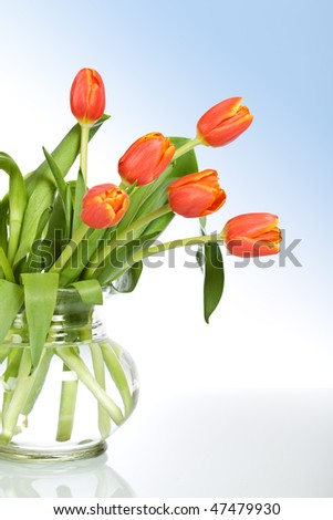 Beautiful tulips in glass vase on soft blue background - stock photo