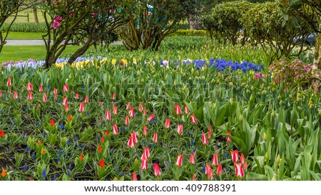 Beautiful tulips in the spring. Variety of spring flowers blooming in beautiful garden. Landscape design - the flower beds of tulips.