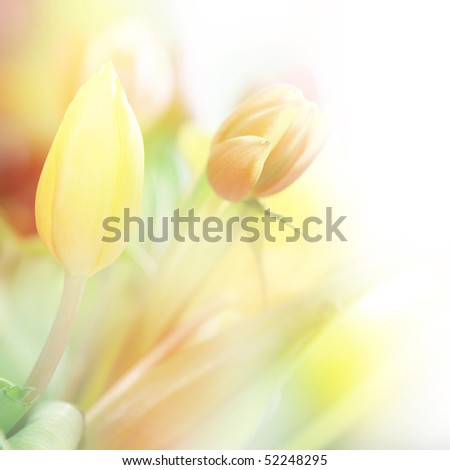 beautiful tulips made with color filters - stock photo