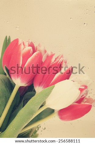 Beautiful tulips on metallic background - stock photo