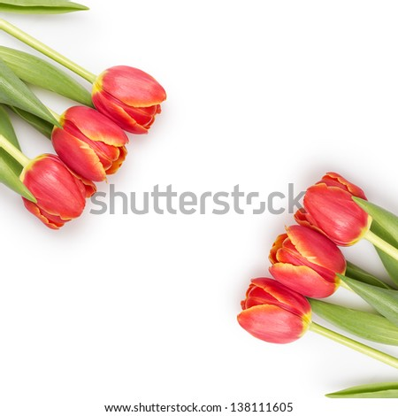 beautiful tulips template, isolated on white background - stock photo