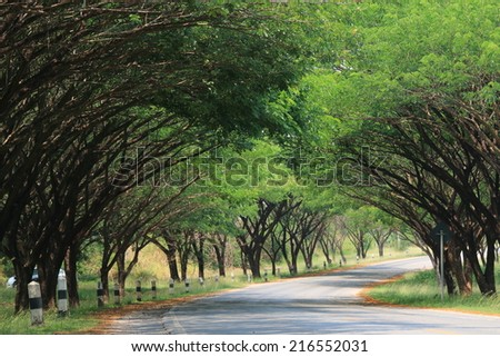 Beautiful Tunnel trees in Thailand - stock photo