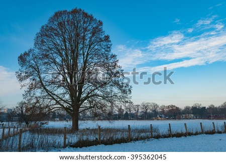 Beautiful twilight scene on snow covered meadow in winter   Trees without leaves in dog park on a cold day in December against trees and blue cloudy sky, image for nature blog - stock photo