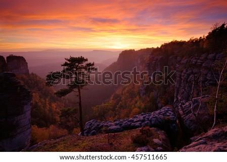 Beautiful twilight sunset landscape. Evening in rocky hill with big pine tree. Sun with ping and orange sky. Evening sun during sunset in Czech national Park Ceske Svycarsko, Bohemian Switzerland - stock photo