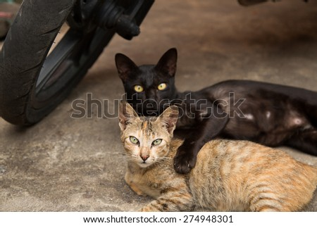 Beautiful two cuddle cats - stock photo