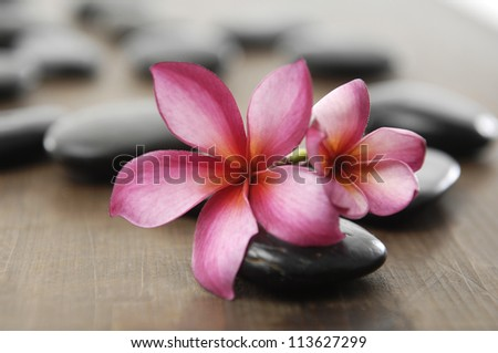 Beautiful two frangipani flower and zen stones on wooden board - stock photo
