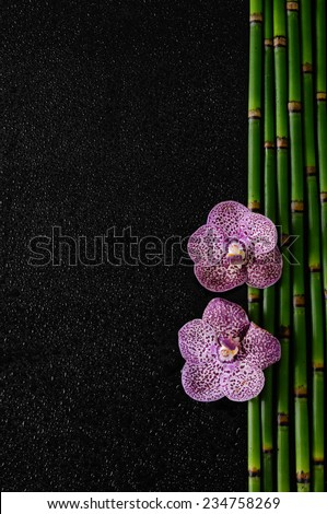Beautiful two orchid on thin bamboo grove - stock photo