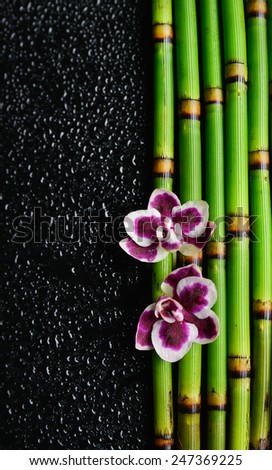 Beautiful two orchid with bamboo grove on wet background - stock photo