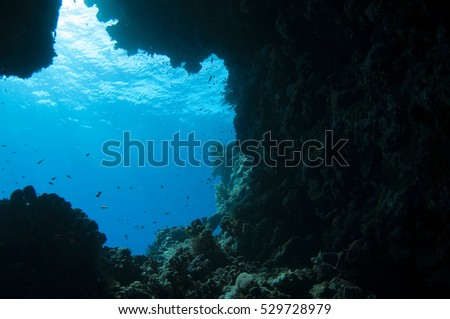 Beautiful underwater cave, Red sea, Egypt.