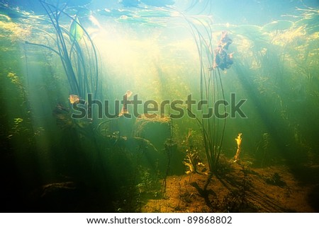 Beautiful Underwater view of a pond in summer - stock photo