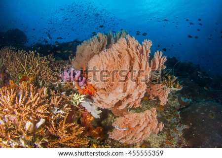 Beautiful underwater view with hard and soft corals and sponges. Coral fishes in shallow water. Nusa Penida, Indonesia. - stock photo