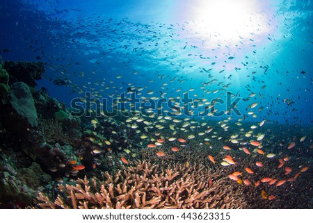 Beautiful underwater view with million fishes at shallow water. Healthy coral reef, with lots of schooling fishes, light and hard and soft corals. Nusa Penida, Indonesia.  - stock photo