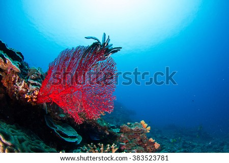 Beautiful underwater view with the healthy reef, soft and hard coral, fishes and sun behind. Nusa Penida, Indonesia. - stock photo