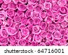 beautiful valentine pink rose flowers - stock photo