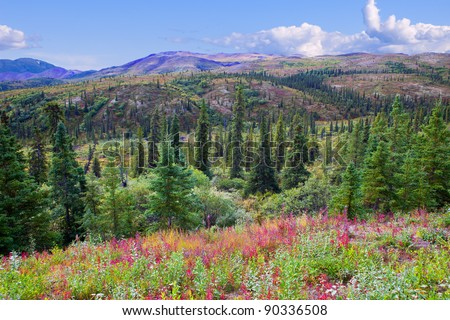 Beautiful Valley in Summer in Denali National Park, Alaska - stock photo