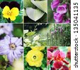 Beautiful variety of colorful flowers and plants collage. - stock photo
