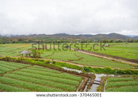 beautiful vegetable garden mountain background