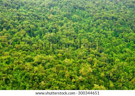 Beautiful vibrant background consisting of trees of the rain forest. - stock photo