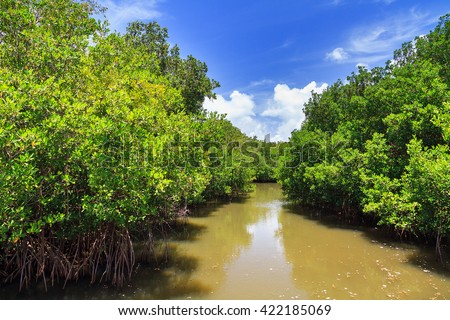 Beautiful vibrant mangrove forest in Puerto Rico with a blue sky in summer - stock photo