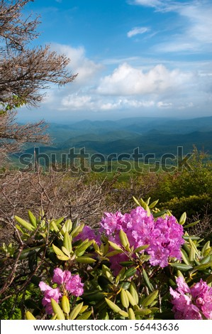 Beautiful view from the Blue Ridge Parkway showing the native Catawba Rhododendron in full bloom. - stock photo