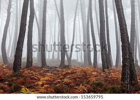 Beautiful view of a forest on a foggy day. - stock photo