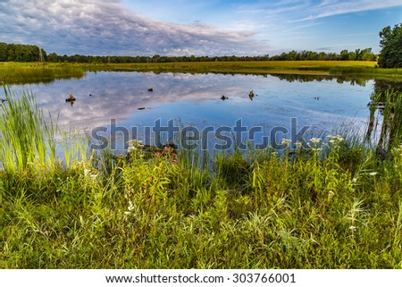 Beautiful view of  a swamp in Michigan on cloudy morning - stock photo