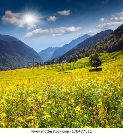 Beautiful view of alpine meadows in the village Zhabeshi. Caucasus mountains. Upper Svaneti, Georgia. - stock photo