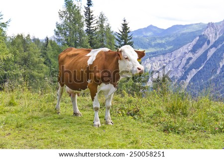 Beautiful view of cows grazing in the Alps
