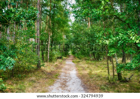 Beautiful view of deep green forest with trees and path way sunny day outdoor on natural background, horizontal picture - stock photo