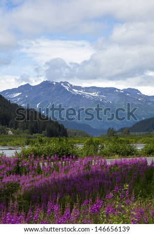 Beautiful View of Fire Weed and Mountains in Seward Alaska - stock photo