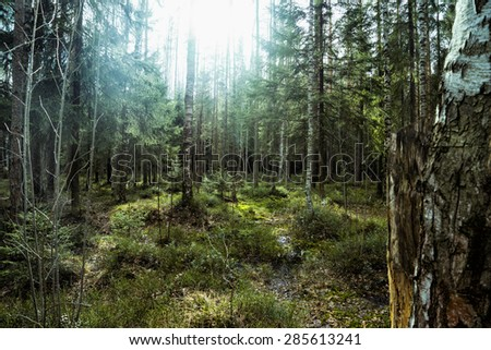 beautiful view of forest in sunlight - stock photo
