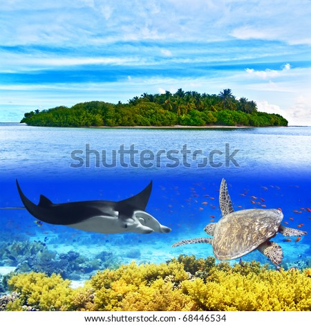 Beautiful view of island and underwater life - stock photo