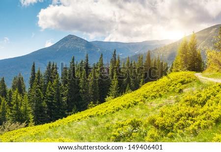 Beautiful view of rural alpine landscape. Overcast sky before storm. Carpathian, Ukraine, Europe. Beauty world. - stock photo