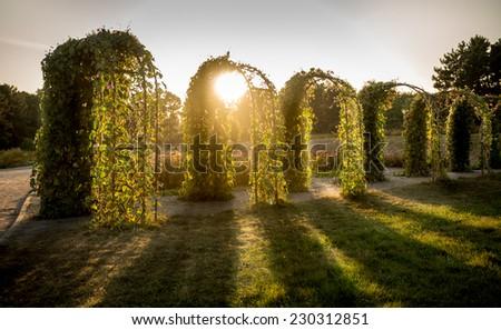 Beautiful view of sun shining through floral arcs at park - stock photo