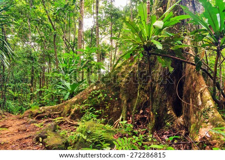 Beautiful view of the rainforest jungle of the Masoala National Park in Madagascar, a UNESCO world heritage site - stock photo