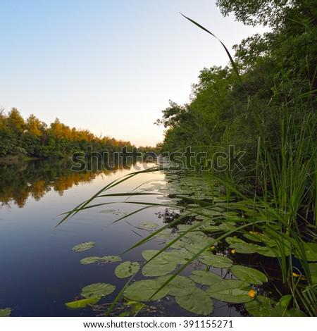 Beautiful view of the river with reeds and yellow lily in the evening - stock photo