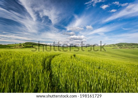 Beautiful view of the tortuous path at sunset in Tuscany - stock photo