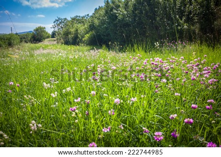 Beautiful view on field with lots of flowers surrounded by trees - stock photo