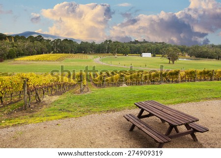 Beautiful Vineyard in Yarra Valley, Victoria, Australia in autumn - stock photo