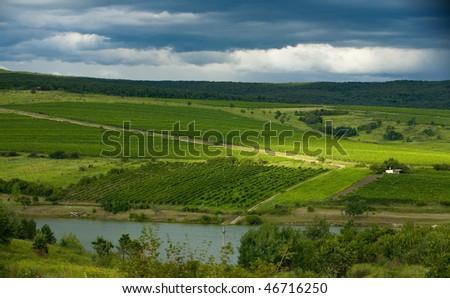 Beautiful Vineyard Landscape - stock photo