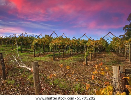 Beautiful Vineyard Landscape - stock photo