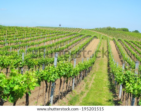 Beautiful vineyard landscape near Velke Bilovice, South Moravia, Czech republic.