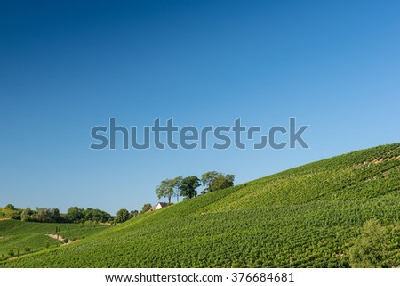 Beautiful Vineyard Landscape With Blue Sky And Sunshine in Ihringen, Kaiserstuhl, Germany.This Region Has The Most Hours Of Sunshine In Germany.Travel And Wine-making Background. - stock photo