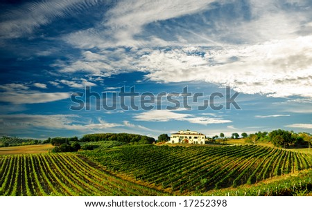 Beautiful vineyard panoramic in Italy... - stock photo