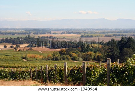 Beautiful vineyards leading down into a valley - stock photo