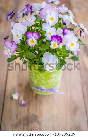 Beautiful viola flowers. Selective focus. For Mother's day or wedding. Copy space for your text. - stock photo