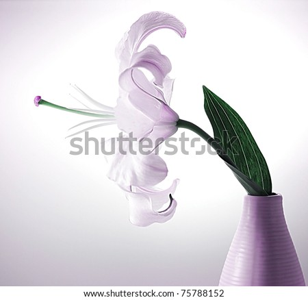 Beautiful violet lily flower in the vase with back light, studio isolated - stock photo